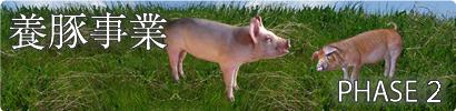 酵母発酵飼料 PHASE2 養豚事業